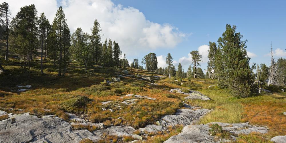 Moorwiesen, Felsen und Nadelwald