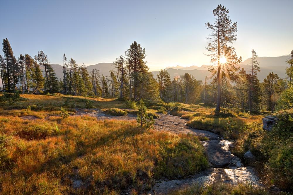 Sonnenaufgang zwischen Nadelwald und Moorwiesen