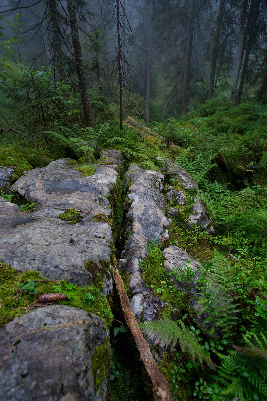 Felskluft im alten Bergwald