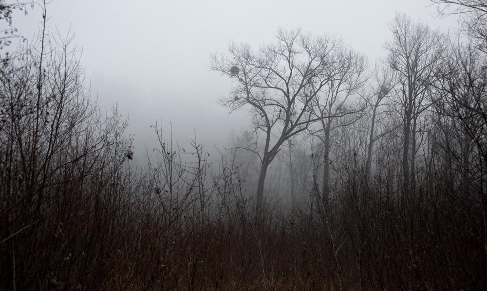 Bäume im Nebel zwischen Cudrefin und Portalban