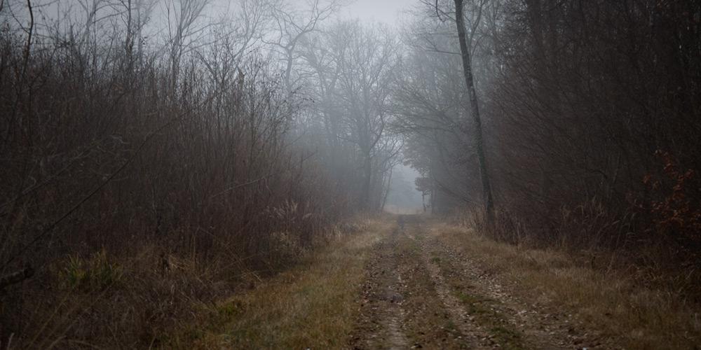 Durch den Wald, irgendwo zwischen Cudrefin und Portalban