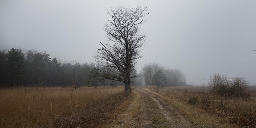 Durchs Schilfmeer im Nebel