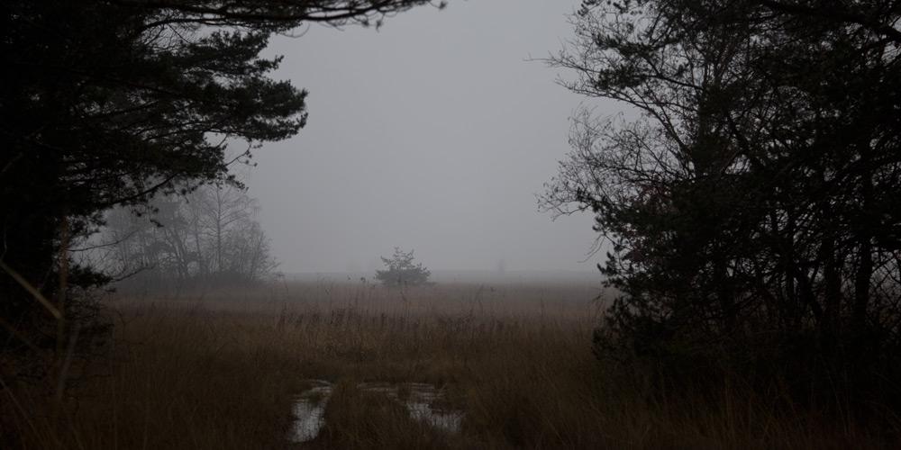 Schilf und Nebel am Neuenburgersee