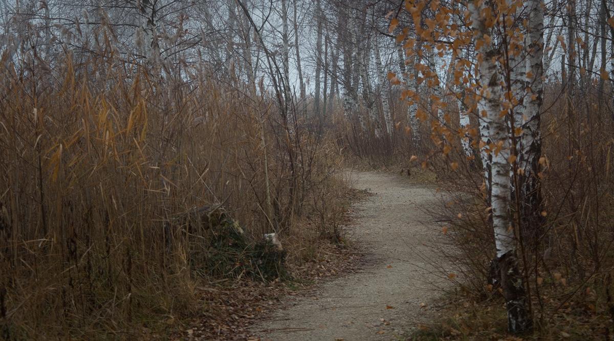Birken in Seenähe bei Gletterens