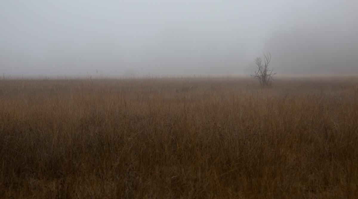 Endloses Schilfmeer im Nebel