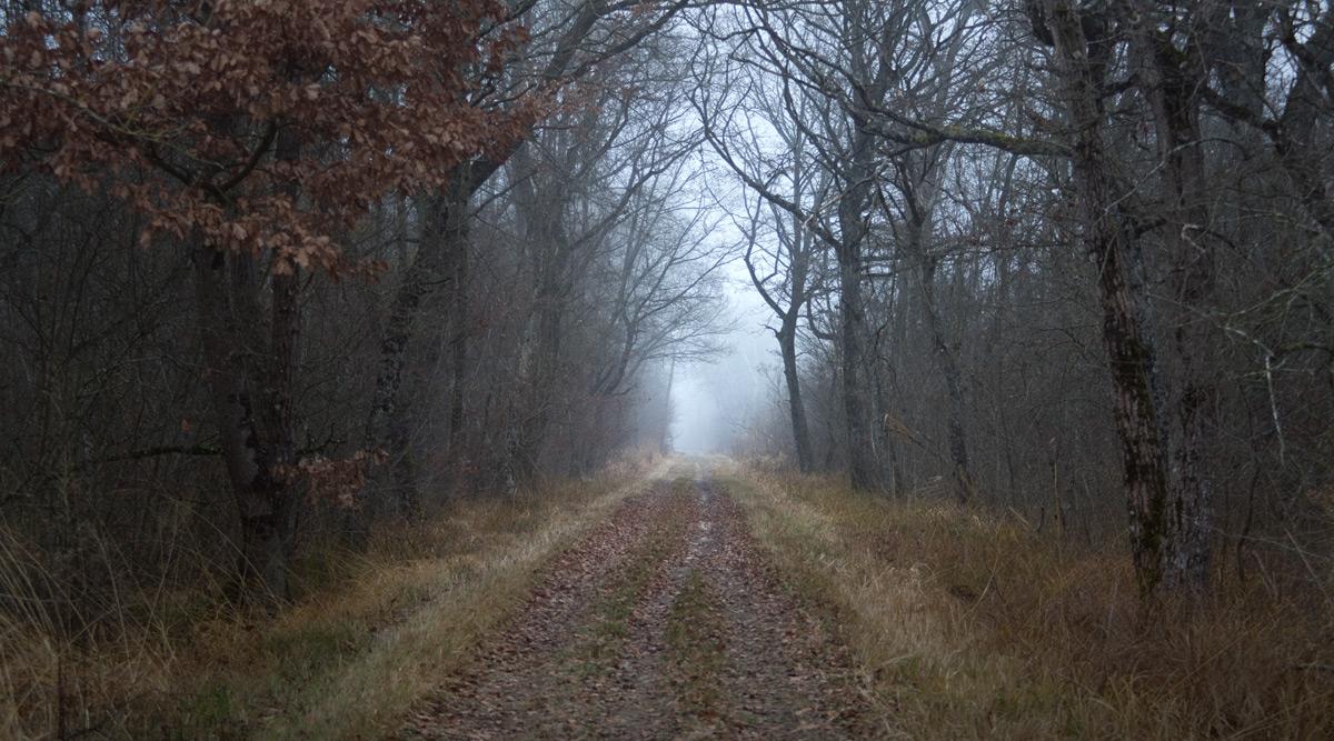 Nebel... Und Wälder in Seenähe