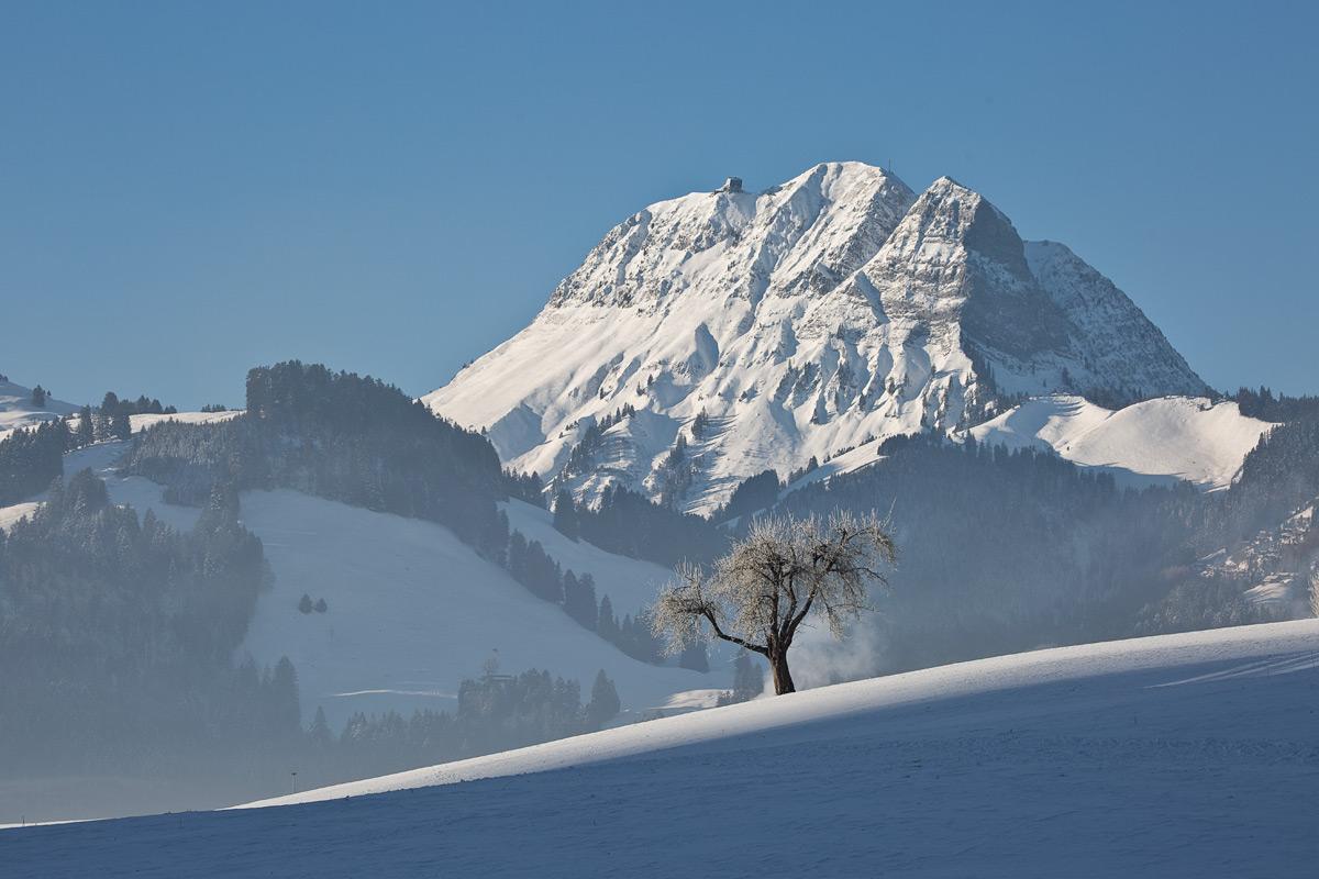 Moléson mit Baum im Winter