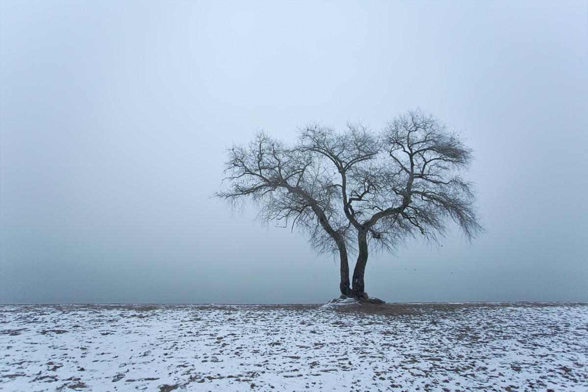 Nebel beim Baum in Salavaux