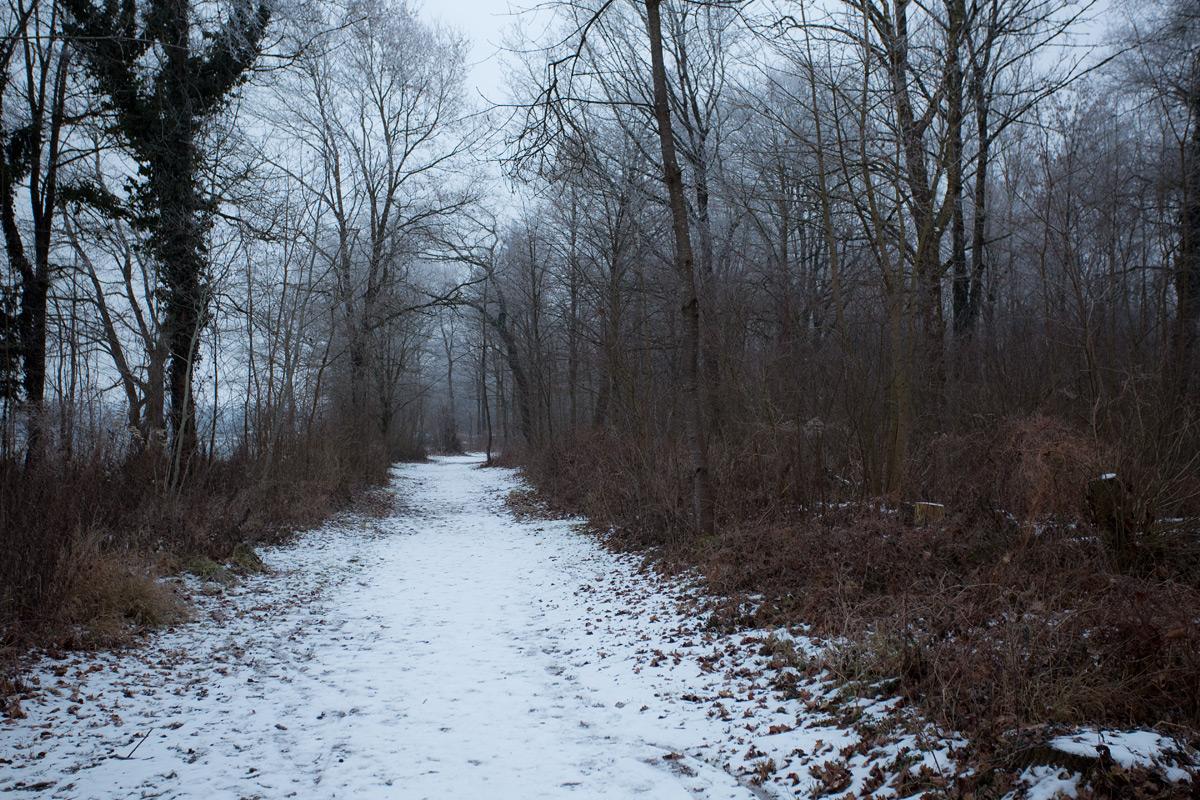Im Wald am Ufer des Murtensees