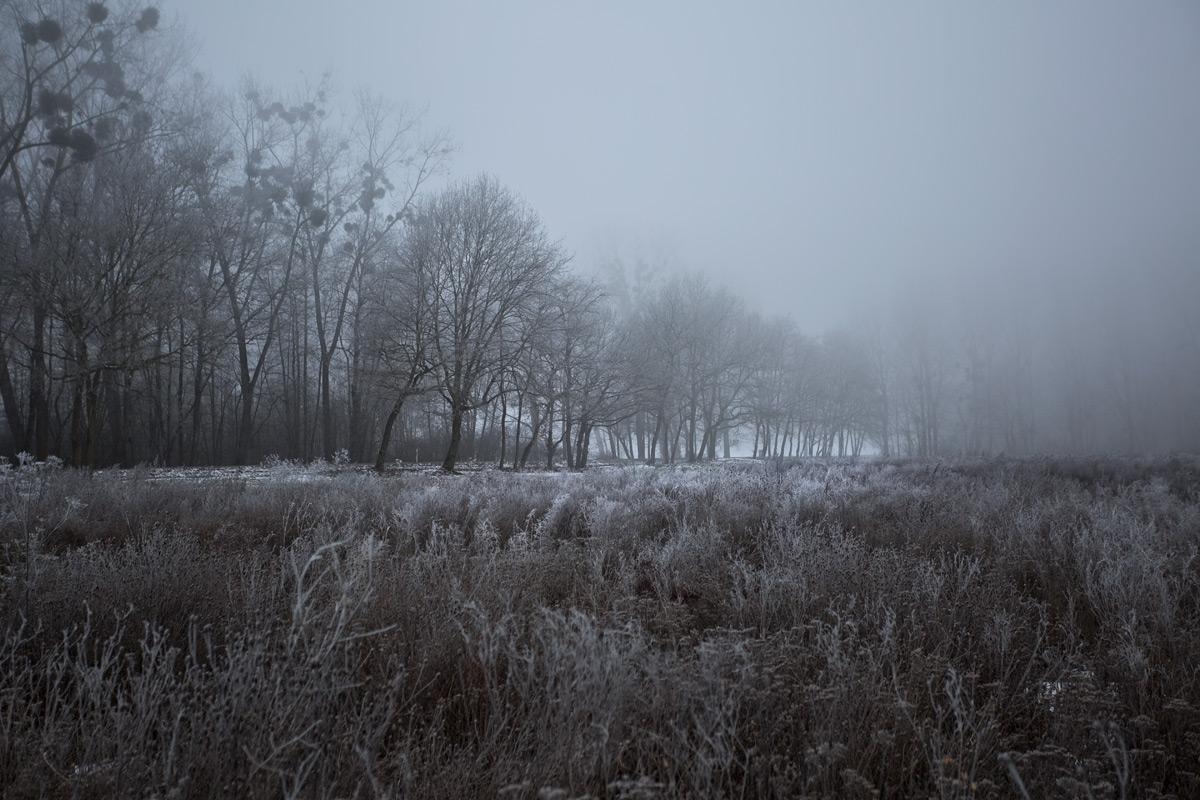 Nebel an der Landstrasse