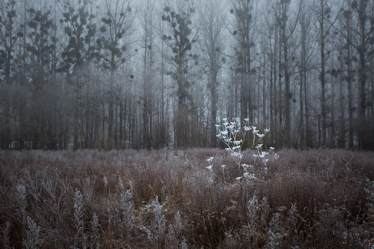 Nebel in einem Feld bei Salavaux