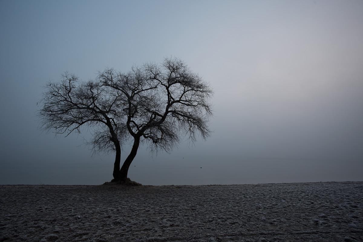 Baum bei Salavaux am Murtensee im Nebel
