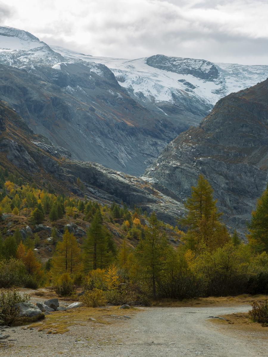 Herbstwald im Val d'Hérens