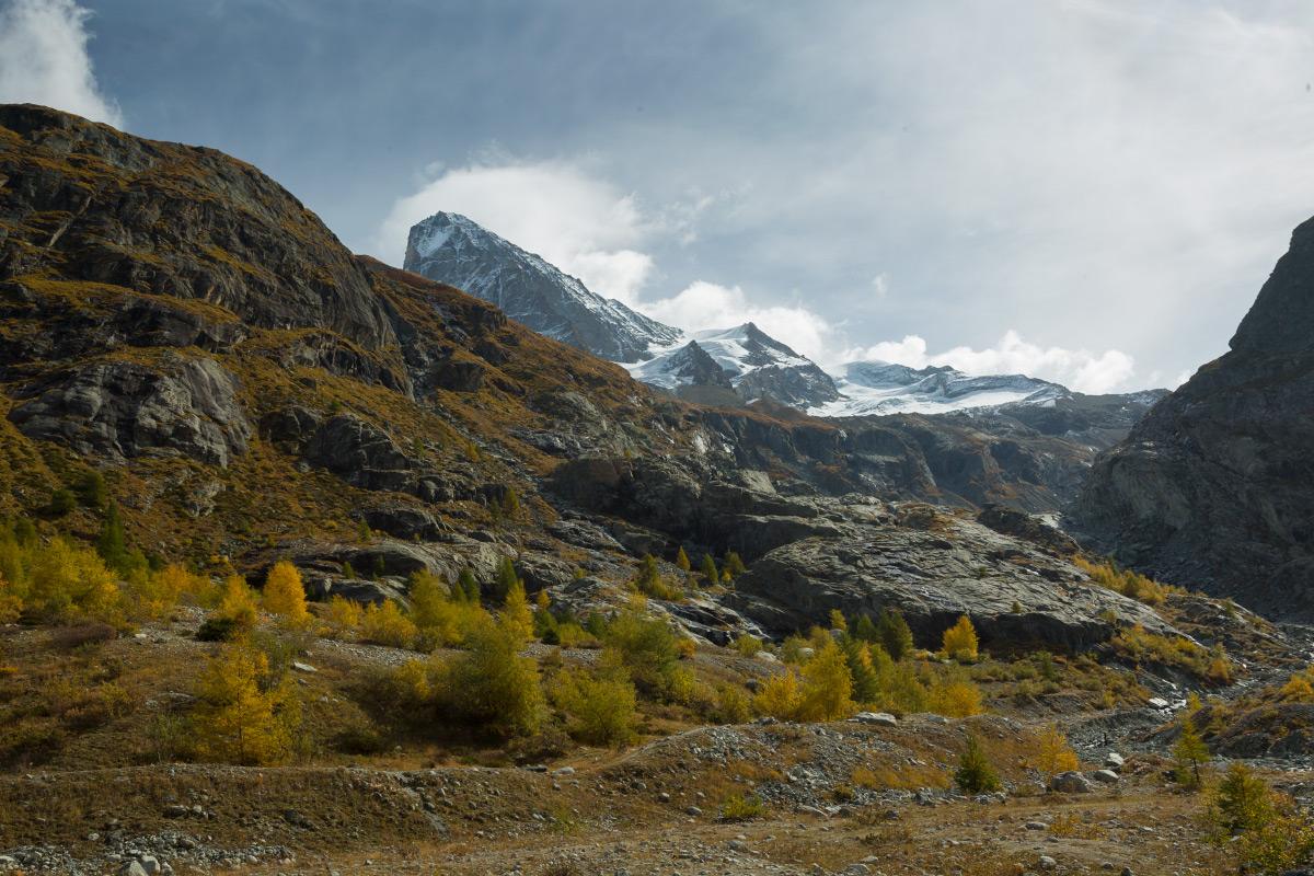 Dent Blanche und Herbstbäume